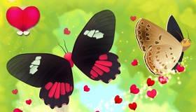 Des papillons au dîner